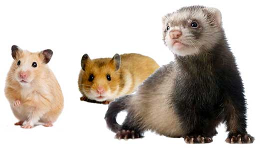 Featured rodents cages - DAMO